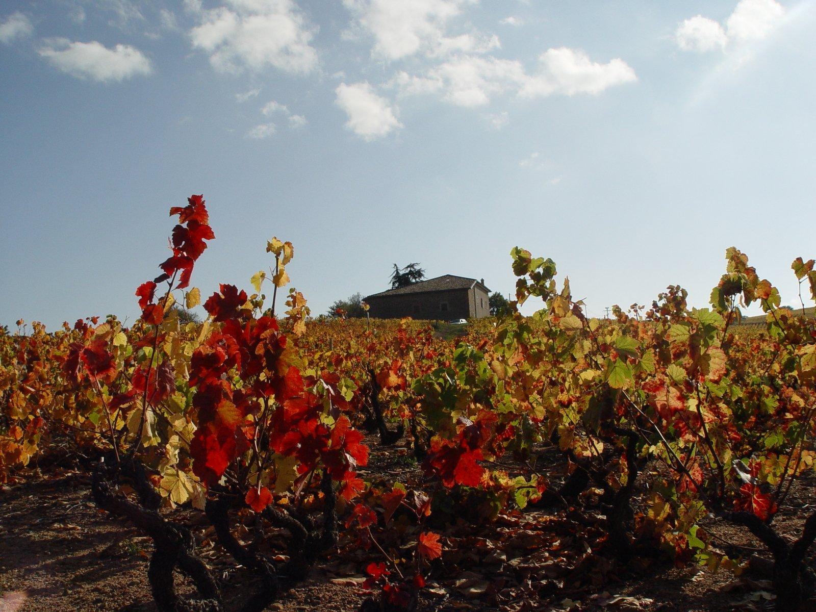 3rd Thursday of November is Beaujolais time!